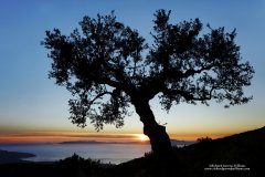 Fine art photography of olive tree at sunset in Greece
