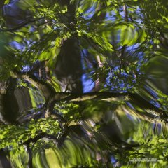 Abstract image of reflections of trees on water