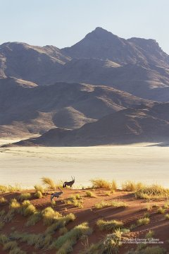 Landscape and wildlife in the Namibian desert