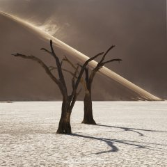 Minimalist photograph of dead trees in desert in Namibia