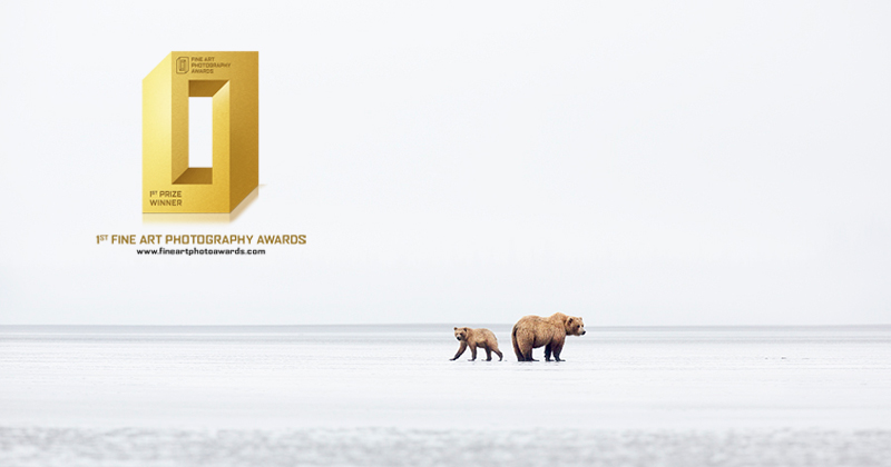 Fine art photograph of bears in wild