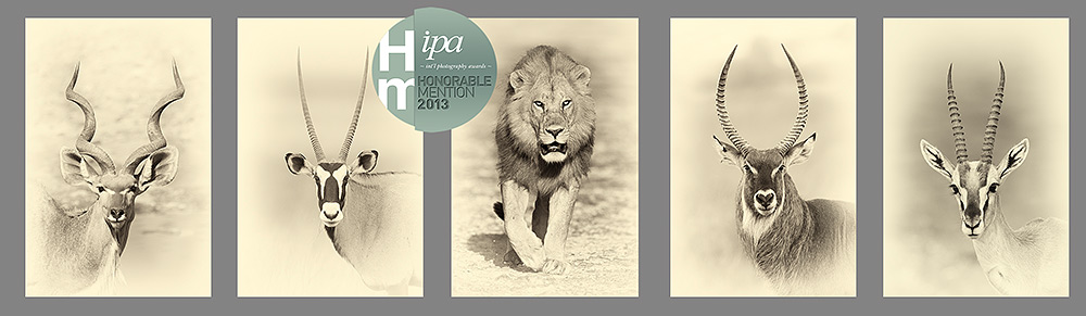 Sepia portrait series from photographic safaris
